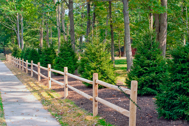 rustic cedar post and rail fence landscaped with oriental spruce picea orientalis basking ridge new jersey